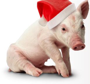 christmas-pig
