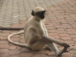 monkey foot