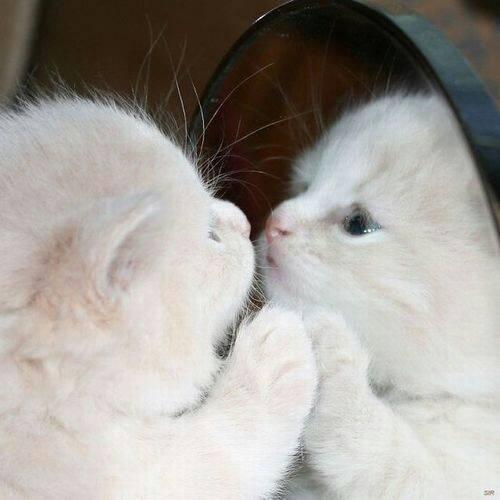 Most beautiful kitten of all!