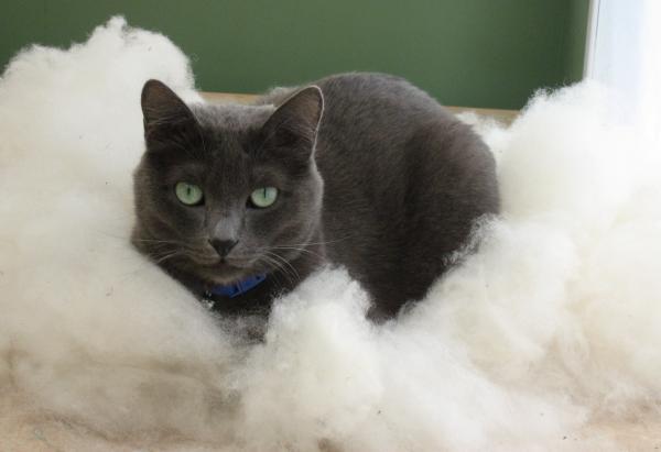 cat-in-a-cloud-aliza-souleyeva-alexander