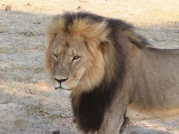Cecil 2