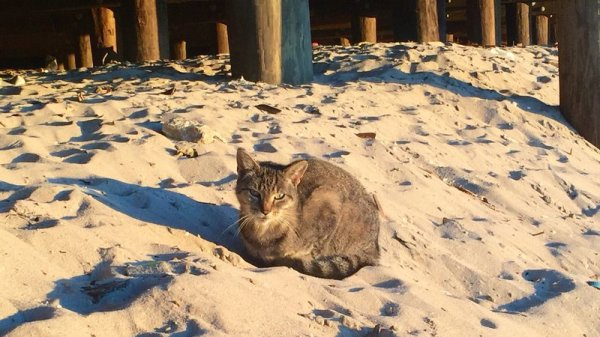 Seaside Cats